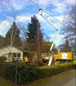 Eugene Tree Removal Service